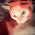 Hello Kitty Red Riding Hood cat