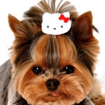 hello kitty dog hair clip fashion