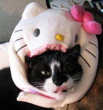 Hello Kitty cat head
