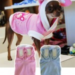 hello-kitty-dogwear