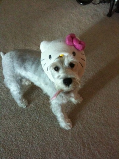 Hello Kitty dog punishment