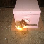 hello kitty bee hive pink