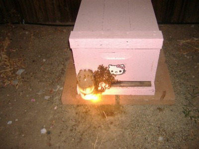 Hello Kitty bee hive with bees