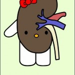 hello kitty kidney