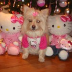 hello kitty Christmas dog