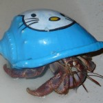 hello kitty hermit crab