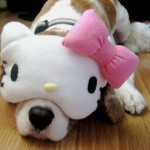 Hello Kitty sleeping dog