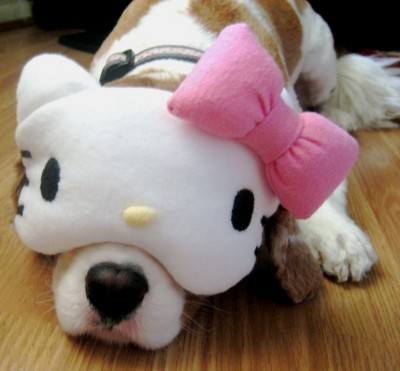 Hello Kitty sleeping mask on dog