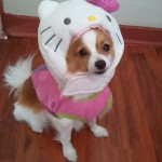 hello kitty dog head