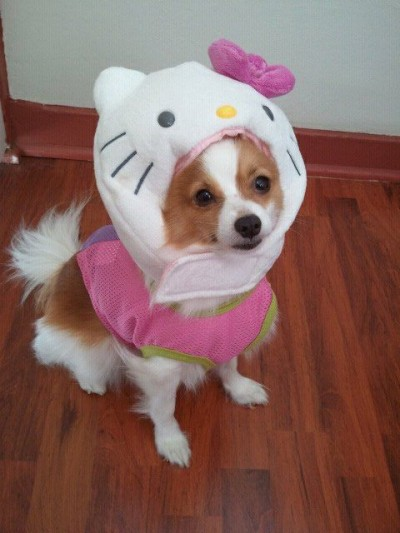 hello kitty dog with plush on head