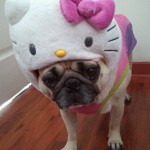 hello kitty pug